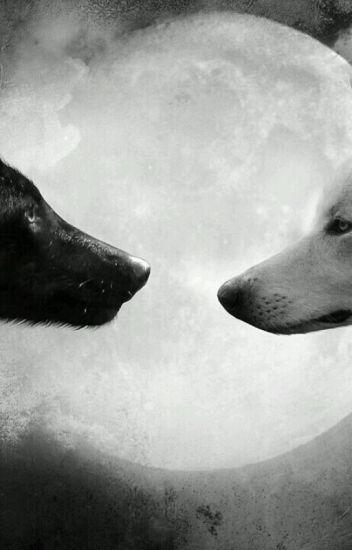 A loba branca e o supremo