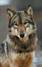 El lobo de Niall (n.p) Adaptada. by AnnaLarryHernandez2