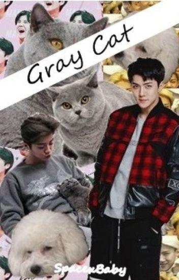 Gray Cat | HunHan