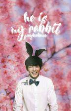 He Is My Rabbit ; Jikook by jungkookaine