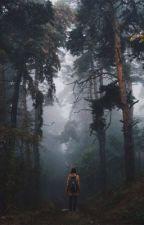 Las Zabłąkanych Dusz by vanessajaniszewska