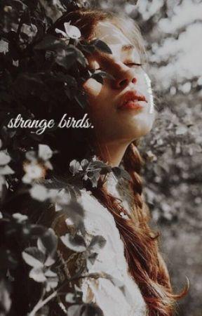strange birds ➢ [ANIMALES FANTÁSTICOS] by kindmess