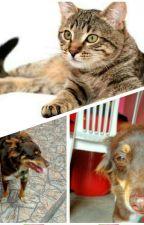 Como cães e gatos by AninhaLauraH