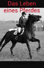 Das Leben eines Pferdes by Kachelofen