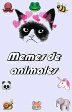 Memes de Animales by -FxckinPerfxct
