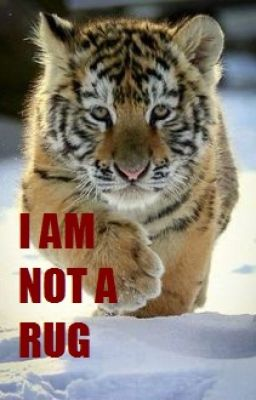 Stop Tiger Poaching Where Does It Occur Wattpad