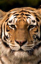 Tiger Tiger by Shadowline2332