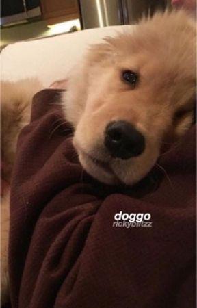 doggo  by rickyblitzz