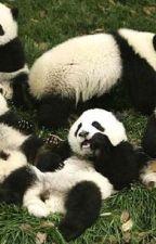 ¡Aprende Chino mandarín con Panda y sus amigos! by FrikiPanda