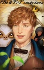 Fantastic Beasts and where to find them imagines by sincerlykate