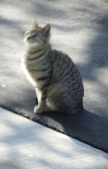 Kat Tails