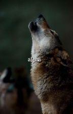 ALPHA ➳ TW Tumblr Gifs ✔️ by gryffindorrs