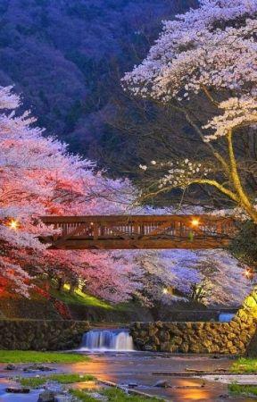 Sakura Blossom by lunawolf8074