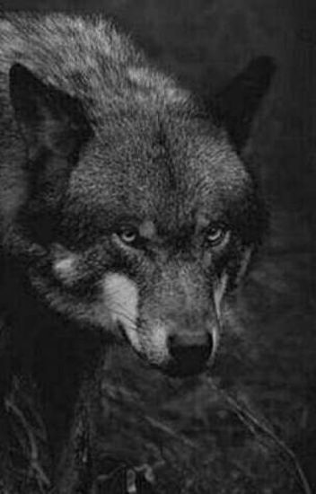 Scared Wolf