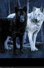White wolf  or Black wolf mated by haleigh527