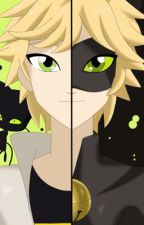 Chat noir x reader lemon  by FlowerMusic24