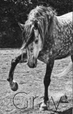A Young Gray Mare by IronFilly