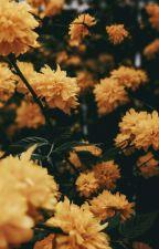 Adrien Tiene Wattpad {Actualizaciones Lentas} by Ales_Agreste