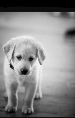 Sad Stories - The Couple and The Dog - Wattpad