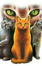 Warrior Cats Test- Wer bist du?  by leno_xx