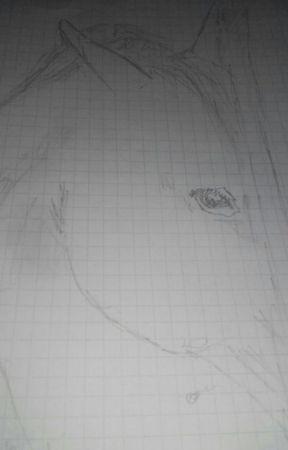 Moje Kresby Hlava Kone Wattpad