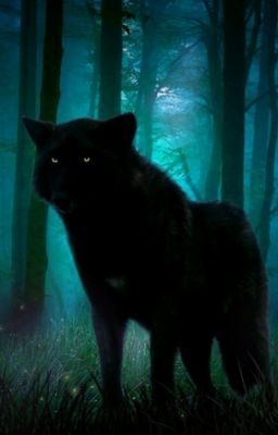 Black Wolf at Night