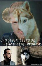 Cananthrope - the metamorphosis (Scavi) by eva-meleena