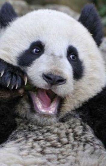 Ranbook d'un fan de panda