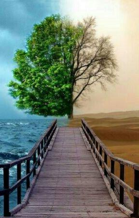 خواطر عن التفاؤل والأمل خواطر عن الحياة والأمل Wattpad