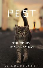 Pest;the story of a stray cat by cecestrash