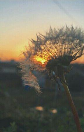 Bukan Dandelion Aku Si Bunga Yang Tak Indah Wattpad