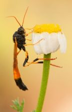 Waspy Stings by Vespidae
