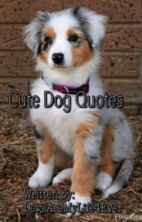 Cute Dog Quotes Quote 6 Wattpad