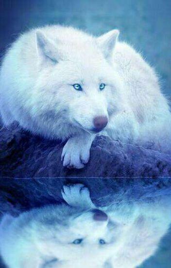 Little Wolf (boyxboy)