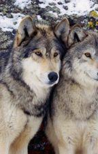 Farkas ikrek by kutyus123