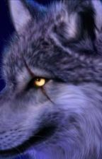 Sprüche 😢❤️ by WolfHDL