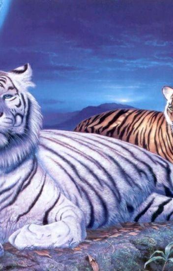 cu tigri