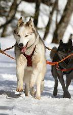 Sled Dog Rp by HugglesTheCat
