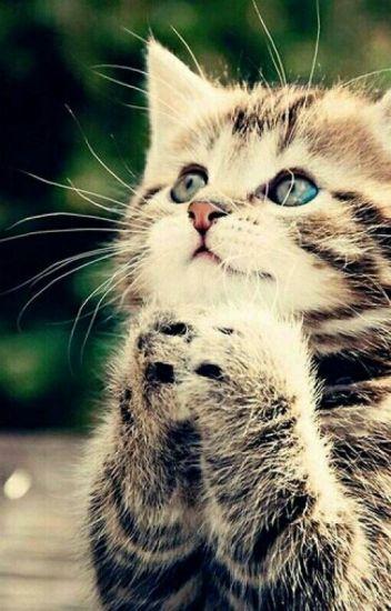 Жизнь одного  котика