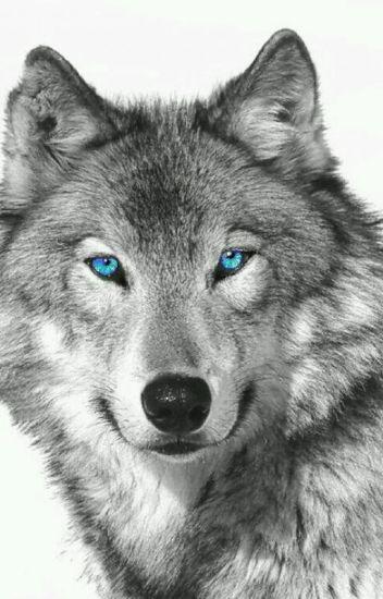 Farkasbőrben