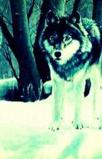 Три влюбленных волка by mimimi0411