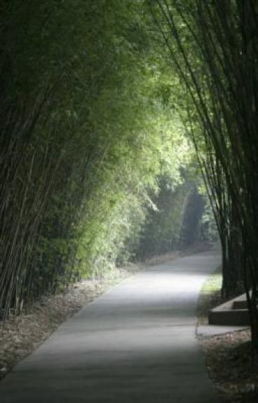 This Path Called Loneliness