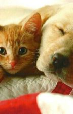 Race de chien et de chat by pluie170303