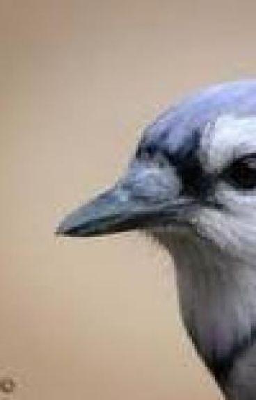 The Bird With Broken Wings