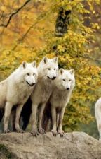 The White Wolf Warrior by crazyhiphopnerd