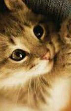 yavru kedi by MorBONCUK06