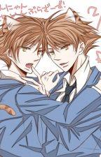 Fallen for the Cats - Hikaru X Reader X Kaoru by abbyuniverse
