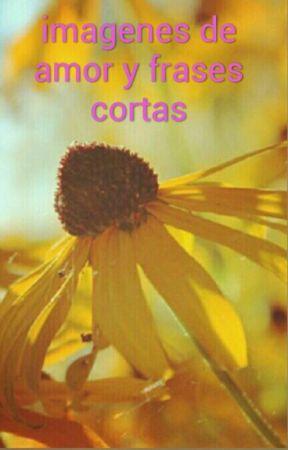 Imágenes De Amor Y Frases Cortas Lluvia De Amor Wattpad