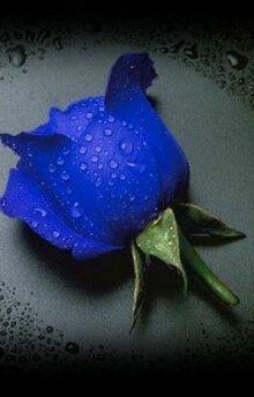 Blue Rose: Ang Paunang Kwento na Sobrang Maikli Lamang by Queen_Marcelle