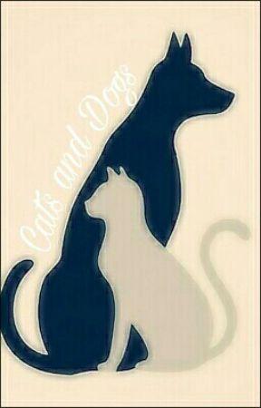 Cats And Dogs  by prettyinwentz